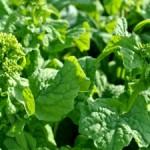 vegetable3